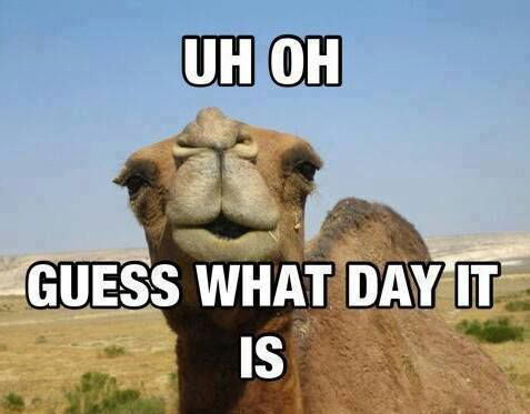 Funny Camel Names Funny-camel-day-question …